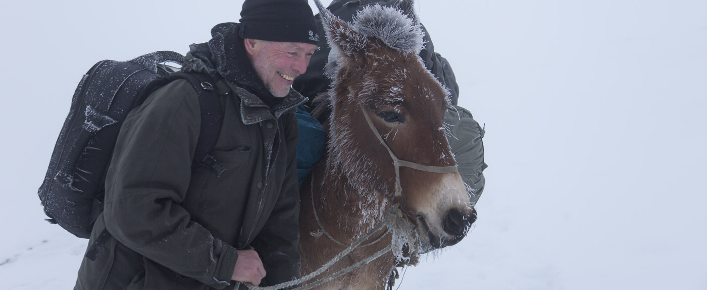 Kaukasus/Caucasus - bereifte Maulesel/frosty Mules