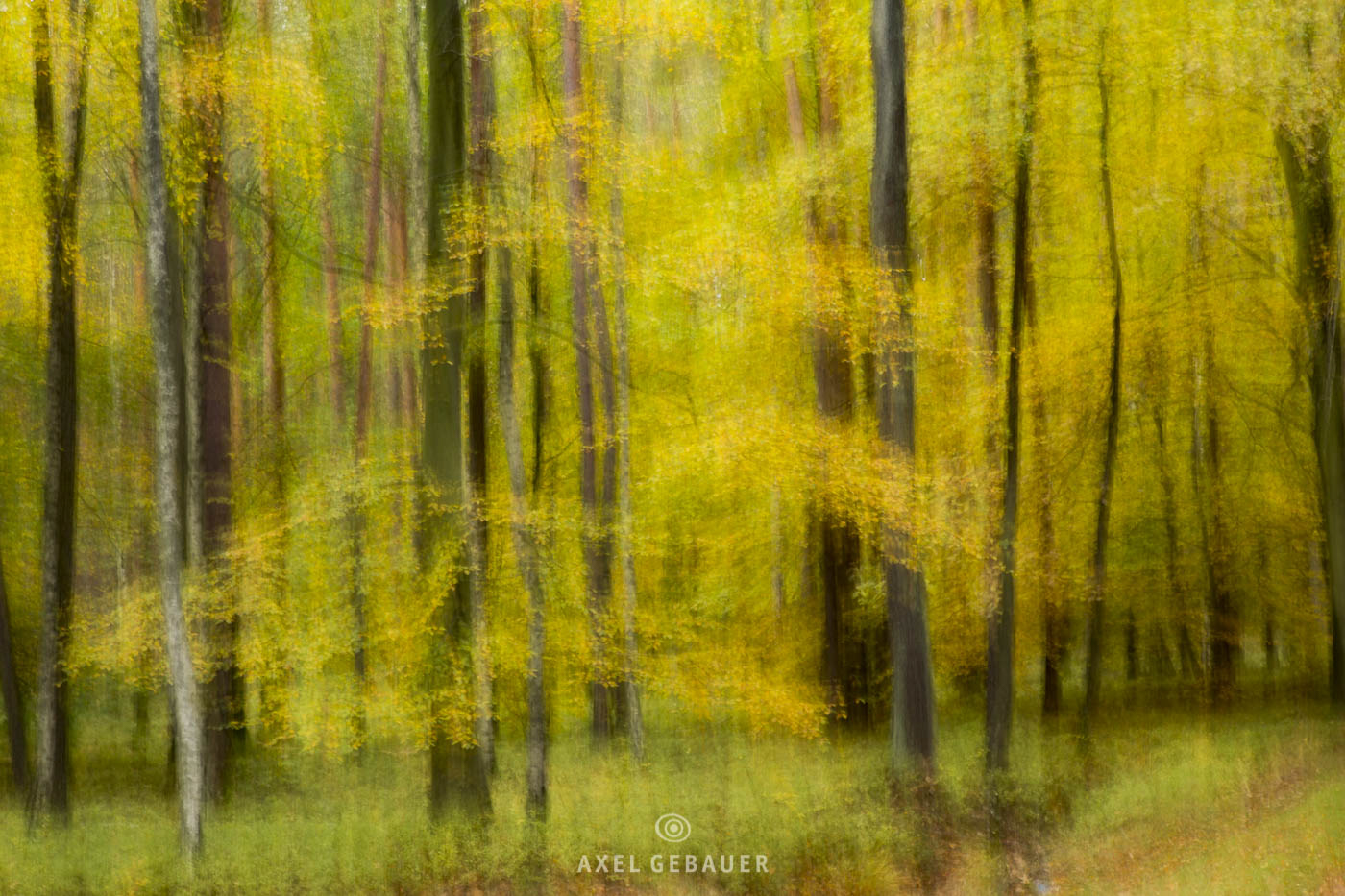 BeechForest, photographic painting due to camera movement