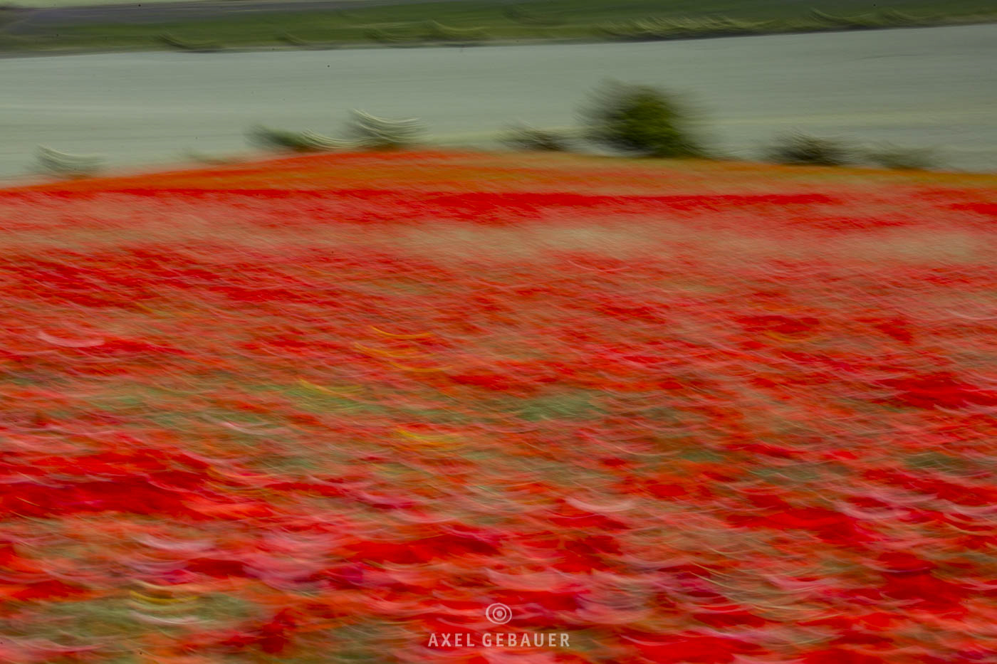 PoppyField, photographic painting due to camera movement