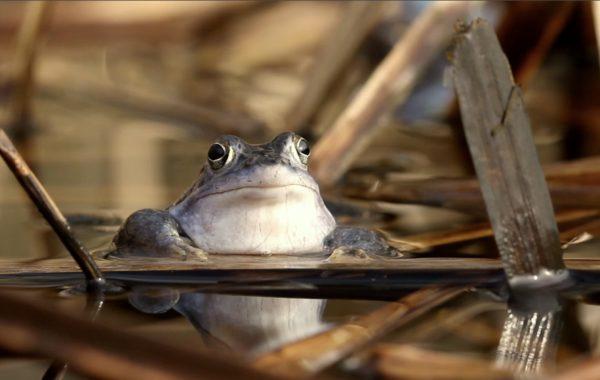 Moorfrog close