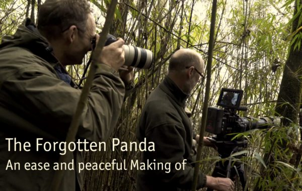 Making Of Forgotten Panda