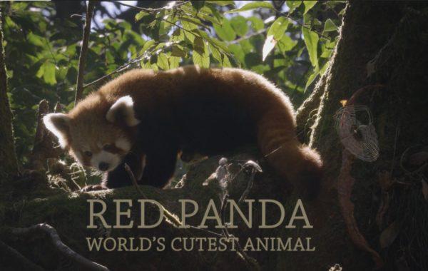 RedPanda2017
