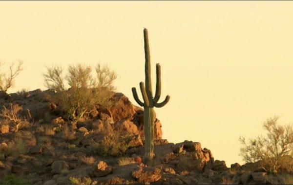 Saguaro NP 2015