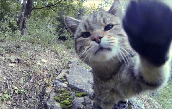 Wild cat touch
